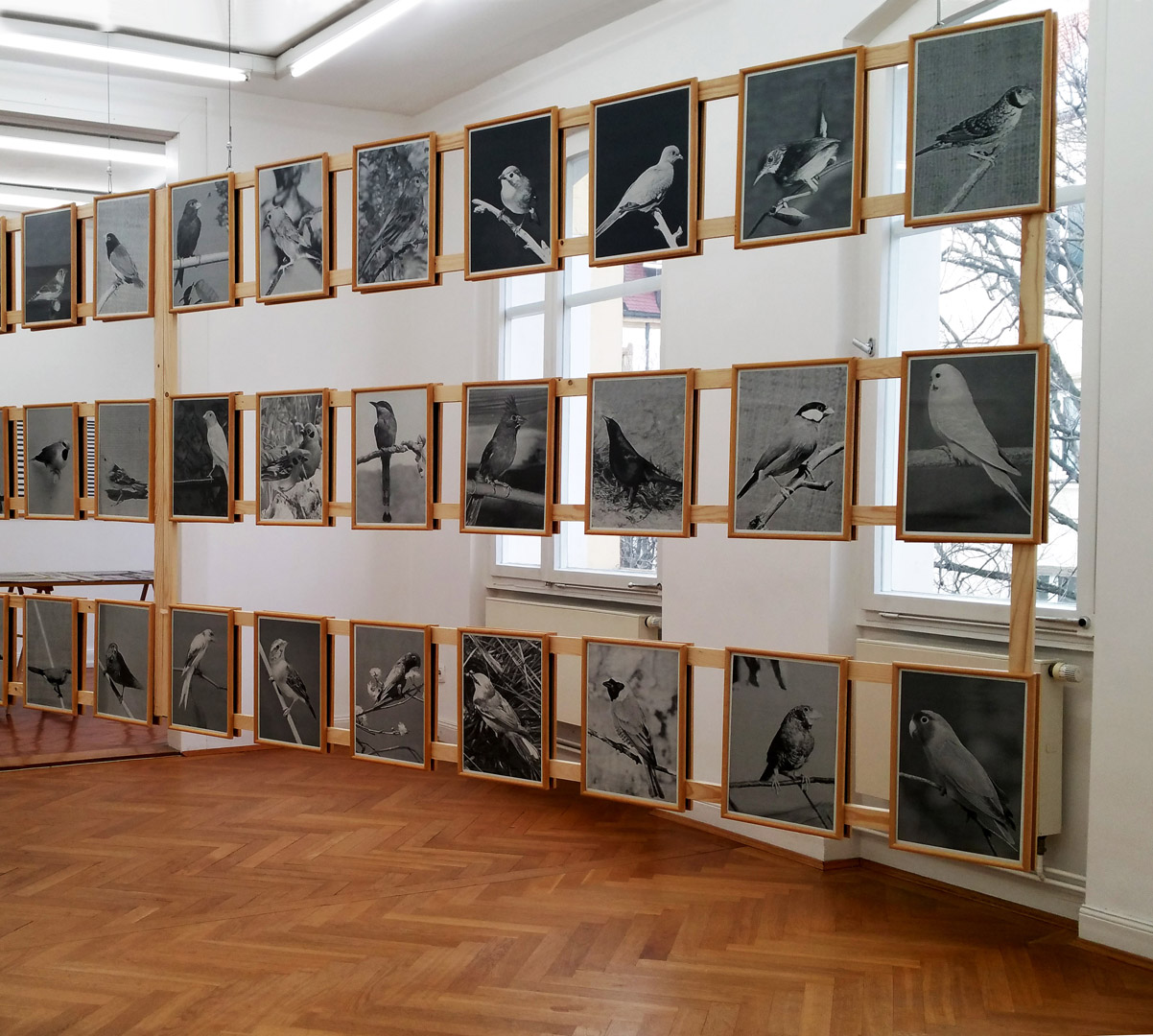 Alex Hanimann, Bird Watching, Fotografie / Installation, Maße variabel,  Ausstellungsansicht