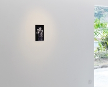 Thilo Westermann, Lillies and card with putto, installation view, Courtesy of the Artist and Oechsner Galerie