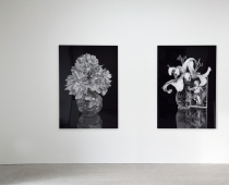 Thilo Westermann, Vanitas (Paeonia lactiflora) and Lillies and card with putto, installation view, Courtesy of the Artist and Oechsner