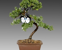 Catherine Biocca, Bonsai Feeling, 2017, Courtesy the artist